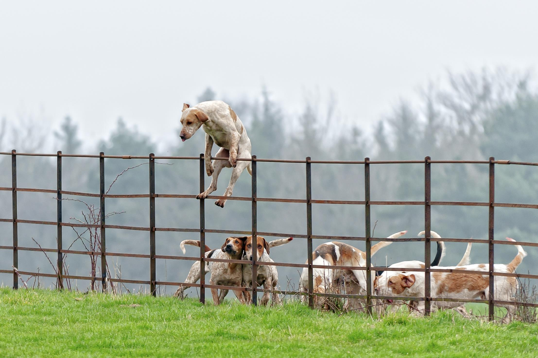 Stop Dog Jumping Over Fence