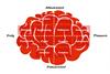 IP Belgium - mind map ()